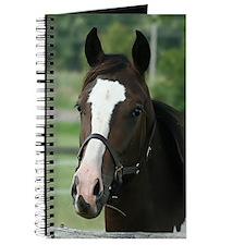 Unique Pinto Journal