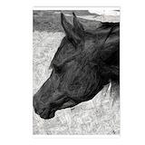 Horse postcards Postcards