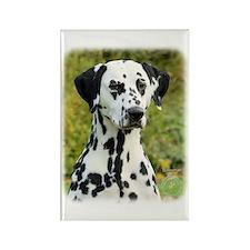 Dalmatian 9T004D-363 Rectangle Magnet (100 pack)