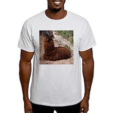 MACHU PICCHU AND LLAMA T-Shirt
