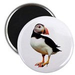 Puffin Wearing Mules Magnet