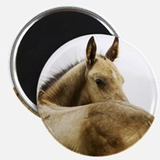 Akhal-Teke Foal Magnet
