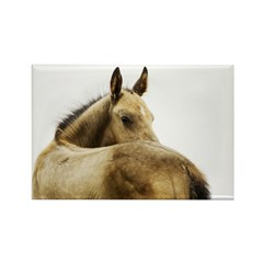 Akhal-Teke Foal Rectangle Magnet (100 pack)