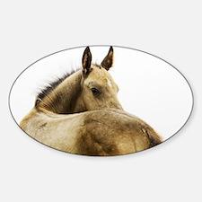 Akhal-Teke Foal Oval Decal