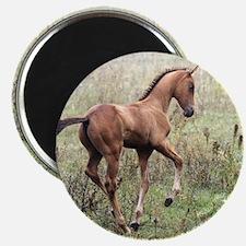 Playful Horse Foal Magnet