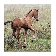 Playful Horse Foal Tile Coaster