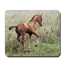 Playful Horse Foal Mousepad