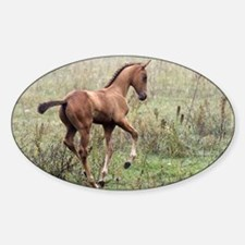Playful Horse Foal Oval Decal