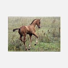 Playful Horse Foal Rectangle Magnet