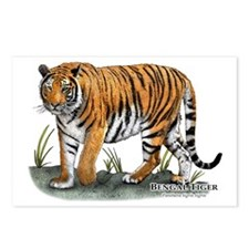 Bengal Tiger Postcards (Package of 8)