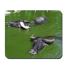 Water Buffalo Mousepad