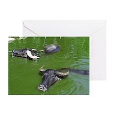 Water Buffalo Greeting Cards (Pk of 10)