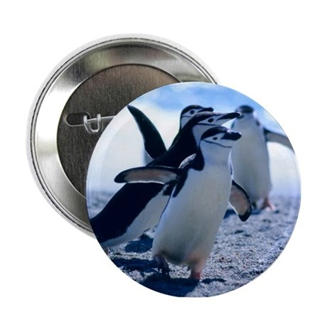 "Cute Penguins 2.25"" Button"