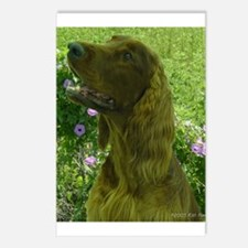 Rock the Irish Setter Postcards (Package of 8)