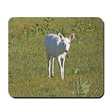 White White Tailed Deer Mousepad