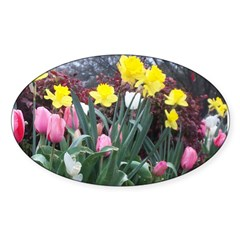 Spring Daffodils Oval Decal