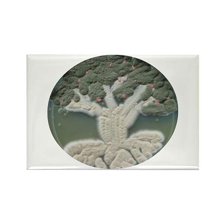 Apple Tree Rectangle Magnet (10 pack)