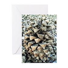PINECONE ON A BEACH (blank inside) (Pk of 10)