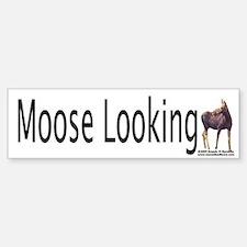 Moose Looking Bumper Sticker!