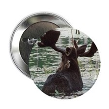 Moose And Friend Button