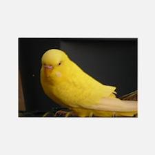 Pips Parakeet Magnets