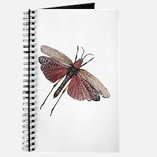 Bug 10 Journal