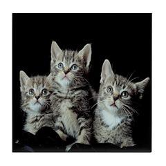 Three Kittens Tile Coaster
