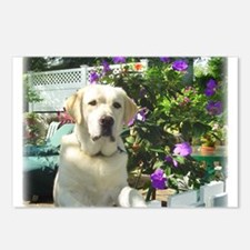 Bogart's Yellow Lab Postcards (Package of 8)