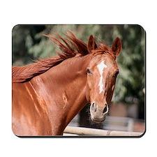 Red Chestnut Horse