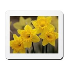 Yellow Springtime Quartet Mousepad