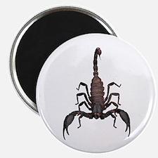 Scorpion (Bug 2) Magnet