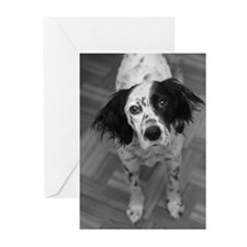 English Setter B&W Photo Greeting Cards (Pk of 10)