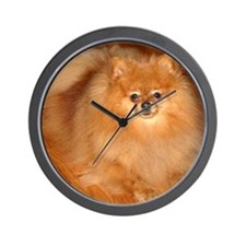 Tucker the orange Pomeranian Wall Clock