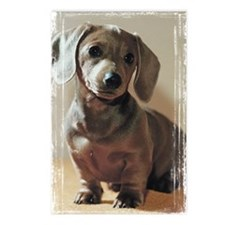 Dachshund Puppy Postcards (Package of 8)