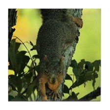 Funny Squirrel tote Tile Coaster
