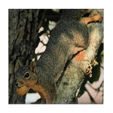 Cute Squirrel tote Tile Coaster