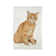 Yellow Cat Rectangle Magnet