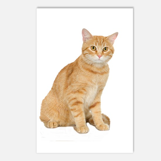 Yellow Cat Postcards (Package of 8)