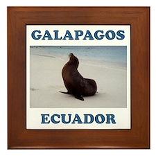 GALAPAGOS SEA LION Framed Tile