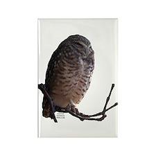Owl Rectangle Magnet