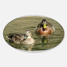 Mallard Duck - Oval Decal
