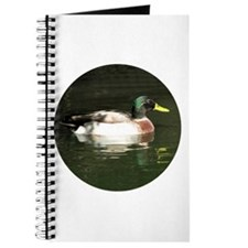 Mallard Duck - Journal