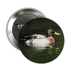 """Mallard Duck - 2.25"""" Button (10 pack)"""