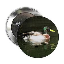 "Mallard Duck - 2.25"" Button"