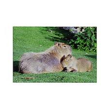 Capybara Snooze Rectangle Magnet
