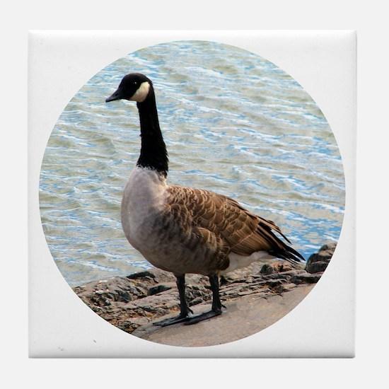 Canadian Goose- Tile Coaster