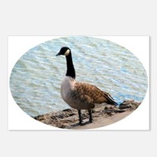 Canadian Goose- Postcards (Package of 8)