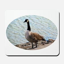 Canadian Goose- Mousepad