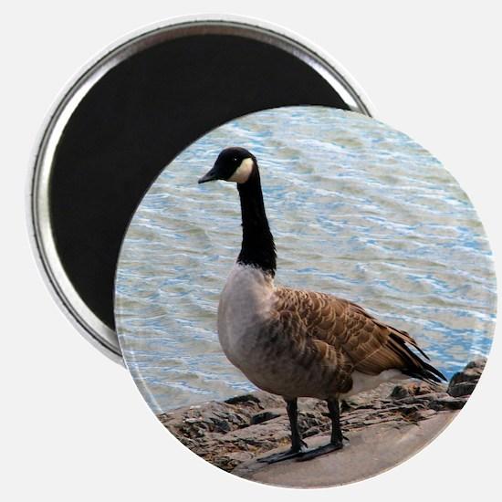 Canadian Goose- Magnet