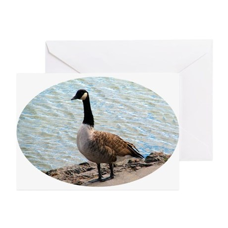 Canadian Goose- Greeting Cards (Pk of 10)